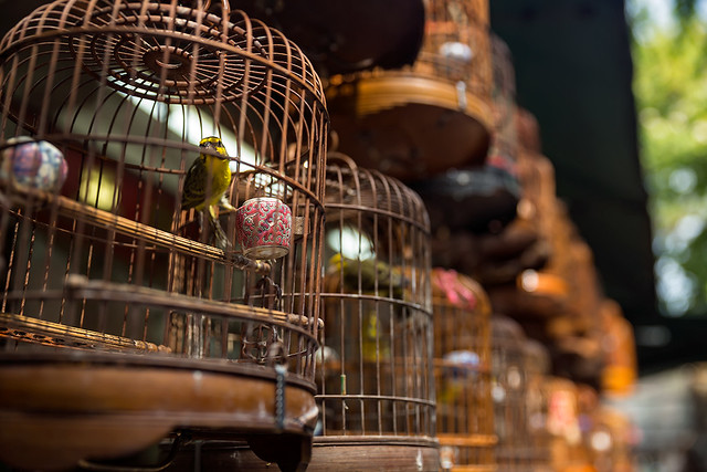 At the bird market in Mong Kok, Hong Kong.