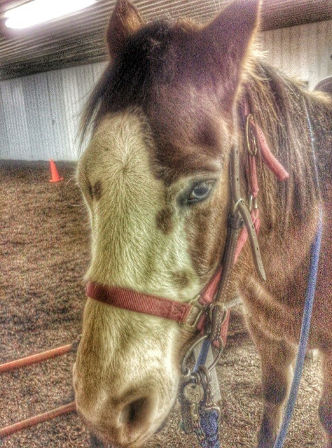 Meet Cisco at #allstartherapy in #ramona #oklahoma #igersok #therapeutichorsebackriding. #horses #hoesesofinstagram