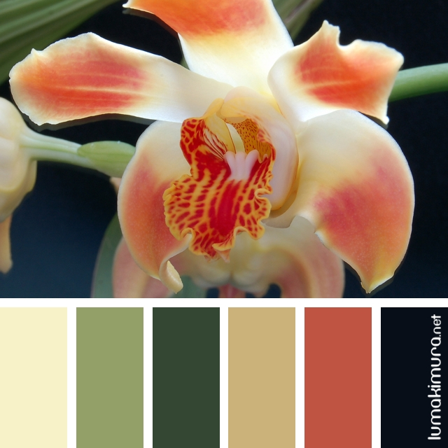 Orquídeas #3