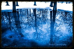 blue reflection of trees 3