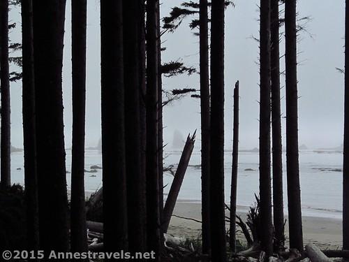 Coastal wood, Olympic National Park, Washington
