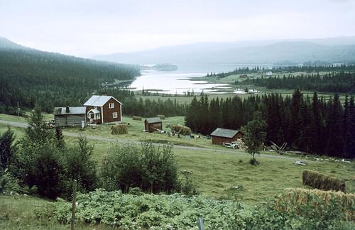 trees plants nature grass landscape riksantikvarieämbetet theswedishnationalheritageboard