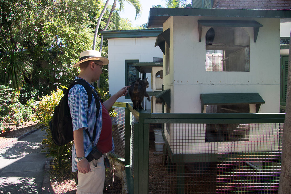 House for cats at Hemingway House