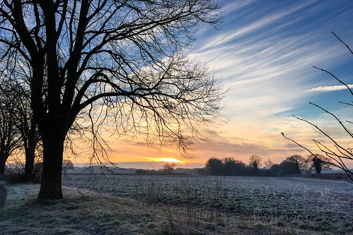 morning trees sunrise january frosty 365 day20 2015 365project 2015yip 203652015