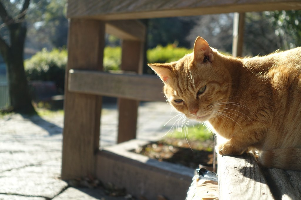A cat in Mejo park 2015.01 No.3.