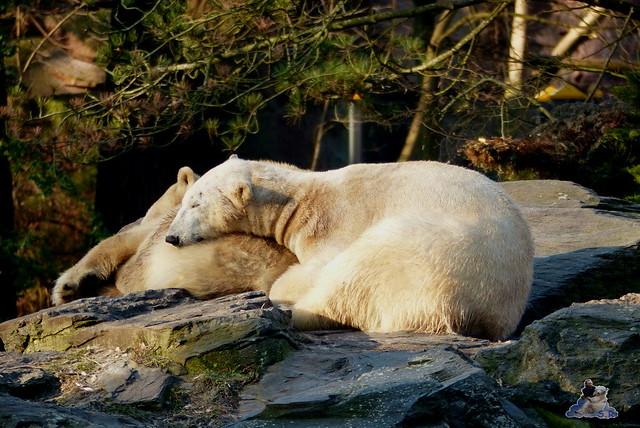 Tierpark Berlin 21.02.2015  036