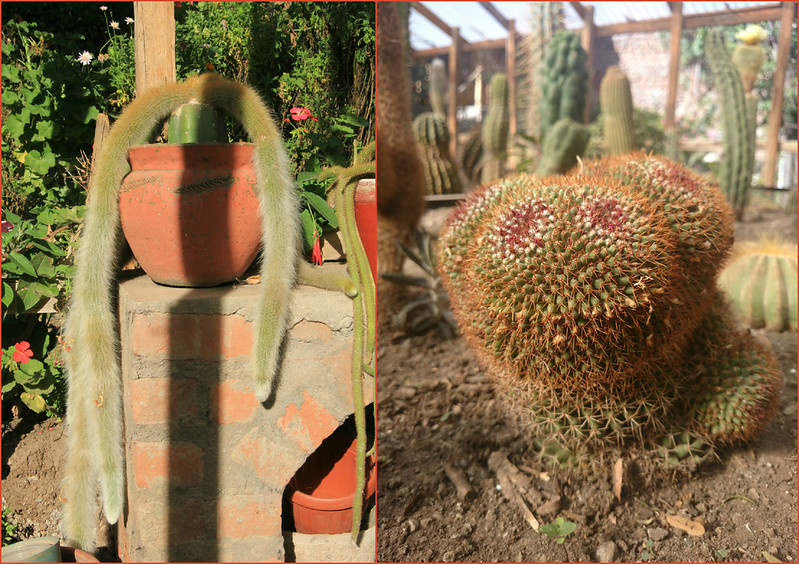 Who else thinks the cactus on the right looks like Zippy