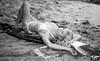Sony A7 R RAW Photos of Pretty, Tall Blond Bikini Swimsuit Model Goddess in Laguna Beach! Victoria Beach! Carl Zeiss Sony FE 55mm F1.8 ZA Sonnar T* Lens & Lightroom 5!