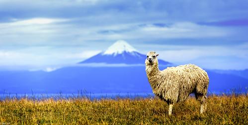 Osorno Volcano and Friend