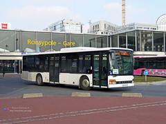 Setra S315 NF - Goldbus (Transroissy 029147)