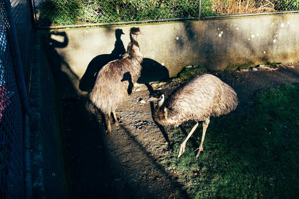 Woodland Park Zoo 12
