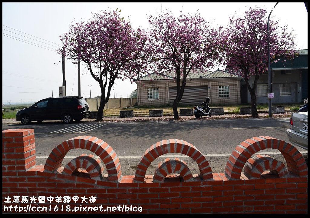 土庫馬光國中羊蹄甲大道DSC_1134