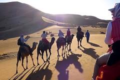 Reise Marokko-Königsstädte. Camp in der Wüste, Kamel-Safari. Foto: Günther Härter.