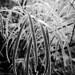 Frosty by fluffydragon