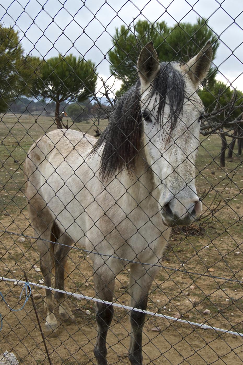 lara-vazquez-mad-lula-horse