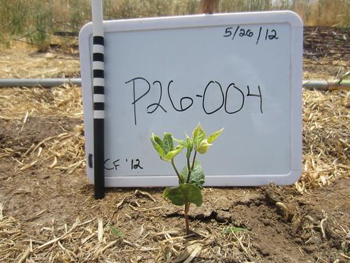 P26-004 CF12 PL1