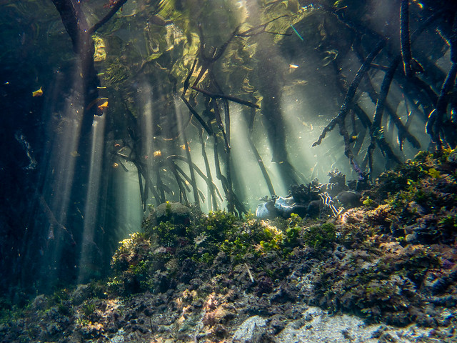 under the mangroves