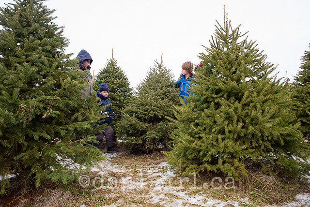 Christmas tree quest 2014-2
