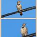 Flickr Flutter