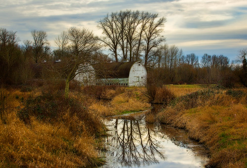 trees reflection barns nisquallynationalwildliferefuge nisquallyriverdelta brownsfarm