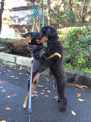 黒犬とネオくん