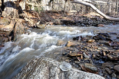 On the Buckeye Trail :: Girdled Rd reservation