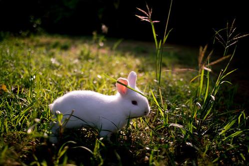 rabbit bunny sunrise canon eos m series srilanka mirrorless mirrorlesscamera canoneosm