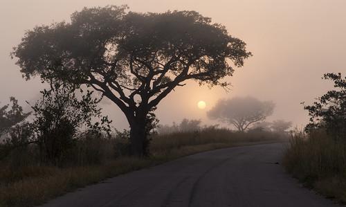 southafrica foggy krugernationalpark mpumalanga krugerpark kruger mistysunrise phabeni phabenigate krugersunrise