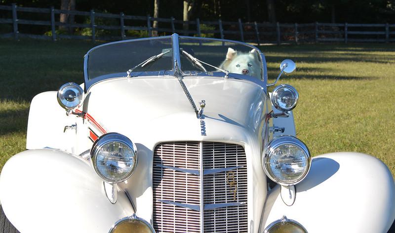 Princess Driving Auburn