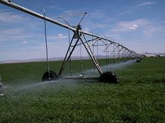 Alfalfa_Irrigation.JPG