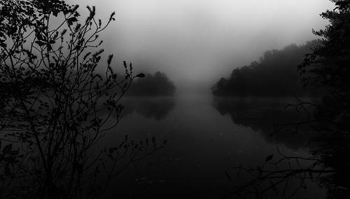 trees bw mist reflection nature water rain fog landscape nj eastbrunswick dallenbachlake