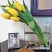 Tulips — Carol Caggiano, AIFD, PFCI