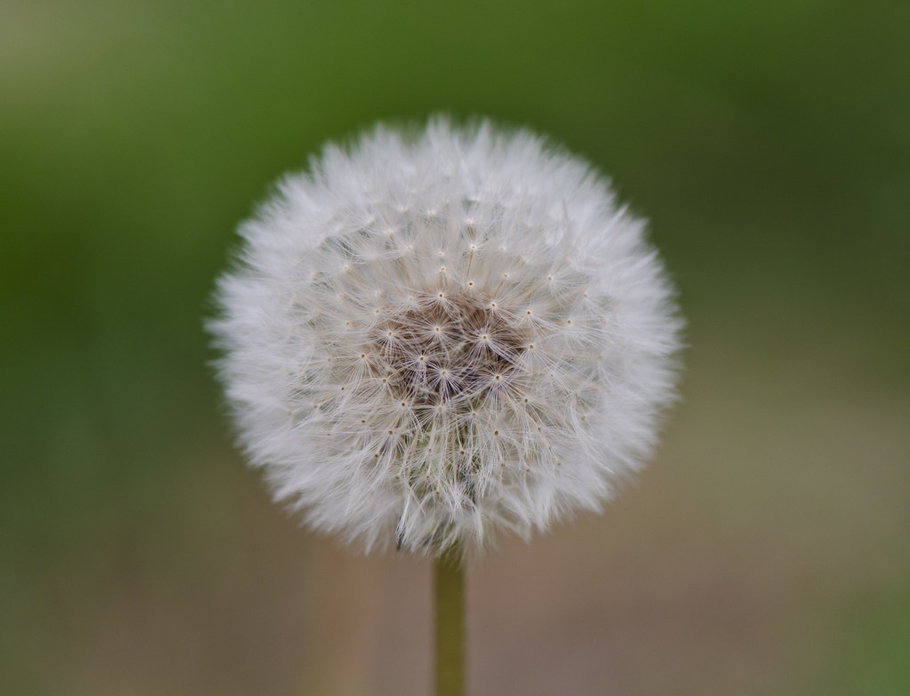 A Centrical Weed