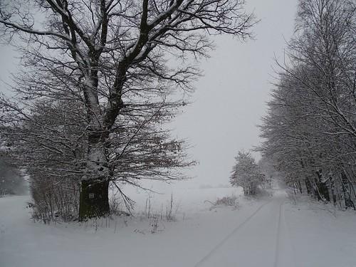 road trees winter white snow black cold nature landscape view path poland polska snowing lodzkie łódzkie