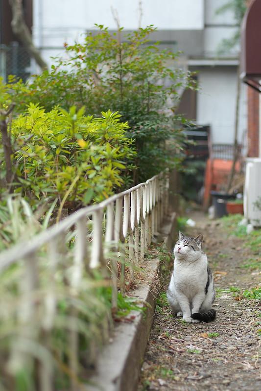 東京路地裏散歩 根津・谷中 ネコ 2015年2月22日