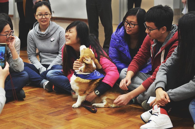 Students interact with canine friend at Professor Paws event
