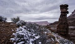 Desert in the Winter