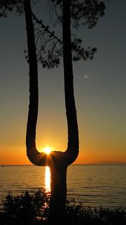 un arbre spécial