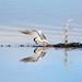 Dive Spout by imageClear