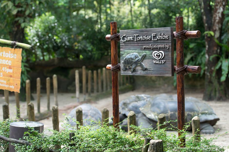 giant tortoise exhibit, singapore zoo