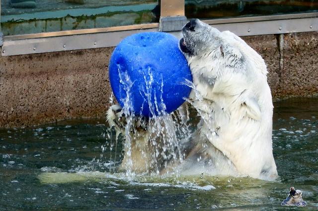 Zoo Berlin 19.03.2015  10