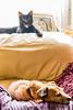 Cat photobombing dog-