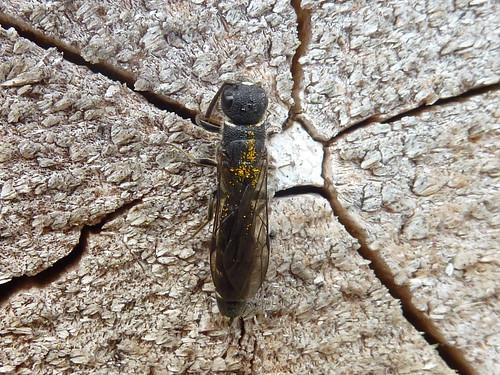 Wie heißt dieser Insekten-hotelbewohner? , NGID1525348397