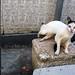 Cats - Mumbai, India by Maciej Dakowicz