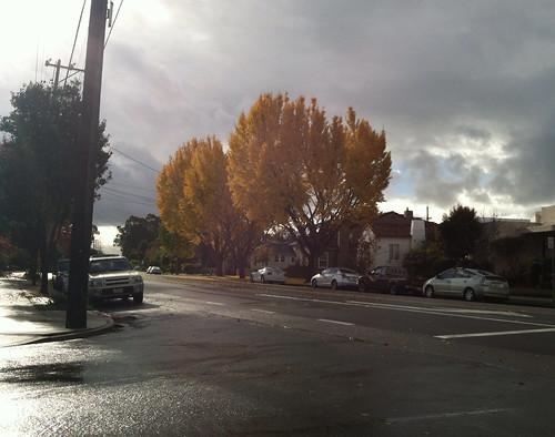 Rain light yellow