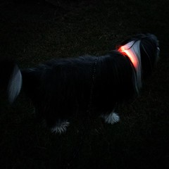 I\'m a glow-in-the-dark puppy #WinterIsComing