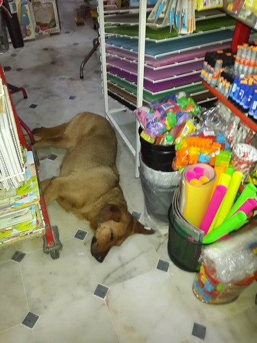 Vigyázat! A kutya a bolt közepén alszik!!!
