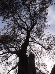 ΔΕΝΤΡΑ / TREES