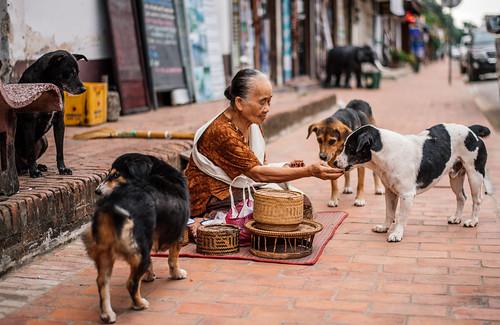 Street scene, Luang Prabang, Laos