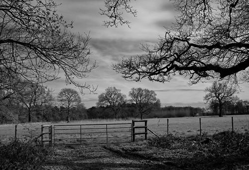 trees cloud house tree canon oak branch hatfield 5d gor44
